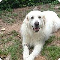 Adopt A Pet :: Rue - Austin, TX