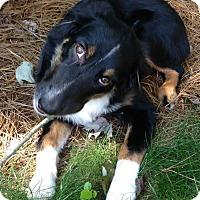 Adopt A Pet :: Finn **COURTESY POST** - Atlanta, GA