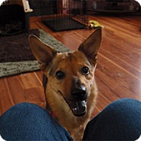 Adopt A Pet :: Gretchen - Philadelphia, PA