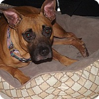 Adopt A Pet :: Jordan - Holmes Beach, FL