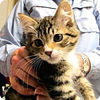 Adopt A Pet :: Jean Alexis - Davis, CA