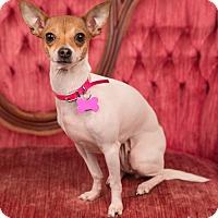 Adopt A Pet :: Dot - Salem, OR