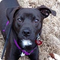 Adopt A Pet :: Clark - Huntsville, AL
