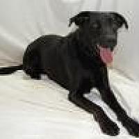 Adopt A Pet :: Erica - Jackson, MS