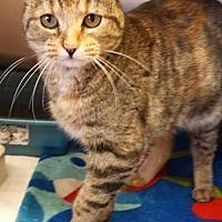 Adopt A Pet :: Stumpy - Lima, OH