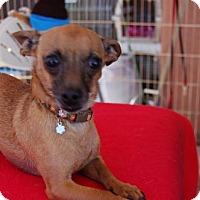 Adopt A Pet :: Dino 1 1/2 Years - C/S & Denver Metro, CO