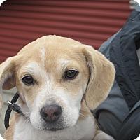 Adopt A Pet :: Citrine - Allentown, PA