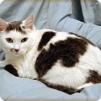 Adopt A Pet :: Mitzi - Fullerton, CA