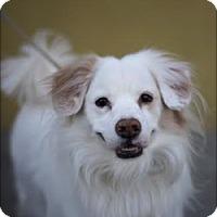 Adopt A Pet :: KYLE - Beverly Hills, CA