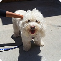 Adopt A Pet :: Coconut - Thousand Oaks, CA