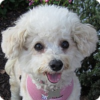 Adopt A Pet :: Sassy - La Costa, CA
