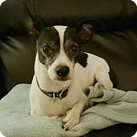 Adopt A Pet :: Gobo - Ypsilanti, MI