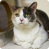 Adopt A Pet :: Samantha - Kettering, OH