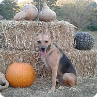 German Shepherd Dog/Basenji Mix Dog for adoption in Attalla, Alabama - Shep
