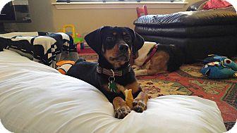 Terrier (Unknown Type, Small) Mix Puppy for adoption in Alpharetta, Georgia - Luna