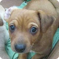 Adopt A Pet :: ZANDER - San Antonio, TX