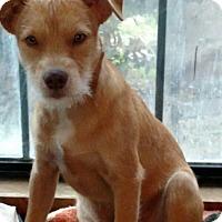 Adopt A Pet :: FUZZY - Spring, TX