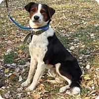 Adopt A Pet :: Champ - Washington, DC