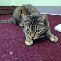 Adopt A Pet :: Shirley - Port Richey, FL