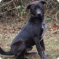 Adopt A Pet :: Terry - Westport, CT