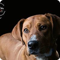 Adopt A Pet :: Sage - New Milford, CT