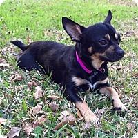 Adopt A Pet :: Jack - Lafayette, LA