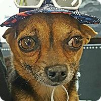 Adopt A Pet :: Rosco - Pompton Lakes, NJ