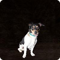 Adopt A Pet :: Chad - Van Nuys, CA