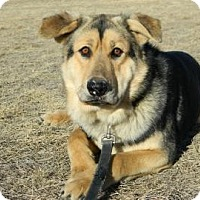 Adopt A Pet :: Chief - Cheyenne, WY