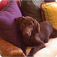 Adopt A Pet :: Leba  **ADOPTED** - Eustis, FL