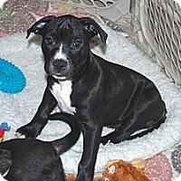 Adopt A Pet :: Frankie - Minneola, FL
