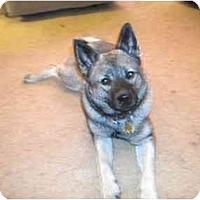 Adopt A Pet :: Chelsea - Belleville, MI