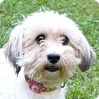Adopt A Pet :: Jelli - Mocksville, NC