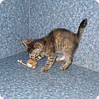 Adopt A Pet :: Mallory - Harrisburg, NC