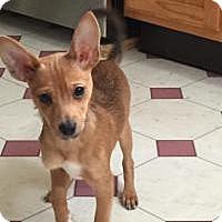 Adopt A Pet :: Peter - Marlton, NJ