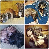 Adopt A Pet :: Rolo - Marietta, GA