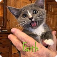 Adopt A Pet :: Faith - McDonough, GA