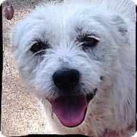 Adopt A Pet :: Tinkerbell - Johnson City, TX