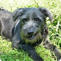 Adopt A Pet :: Bella - Wyanet, IL