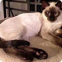 Adopt A Pet :: Blanco - Merrifield, VA