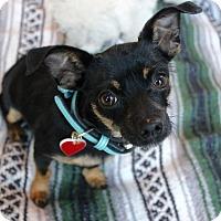 Adopt A Pet :: Winifred - Los Angeles, CA
