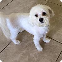 Adopt A Pet :: Cameron - Tustin, CA