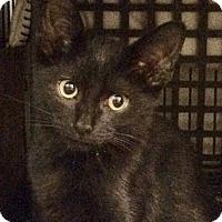 Adopt A Pet :: Solo - East Brunswick, NJ