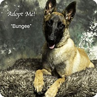 Adopt A Pet :: Bungee - Acton, CA