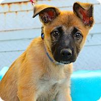 Adopt A Pet :: Ragen - Los Angeles, CA