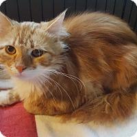 Adopt A Pet :: Duey - Berkeley Hts, NJ