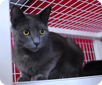 Domestic Shorthair Cat for adoption in Winchendon, Massachusetts - Alora