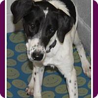 Adopt A Pet :: Jill - Duart, ON