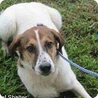 Adopt A Pet :: Olive - Staunton, VA