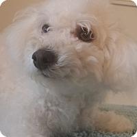 Adopt A Pet :: Sideways - Inglewood, CA
